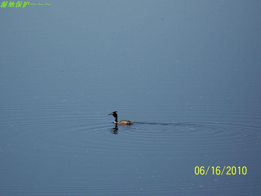湿地鸟类.jpg