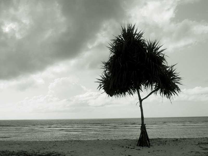 海边的树.jpg