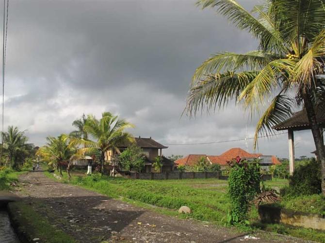 巴厘岛乡间小道.jpg