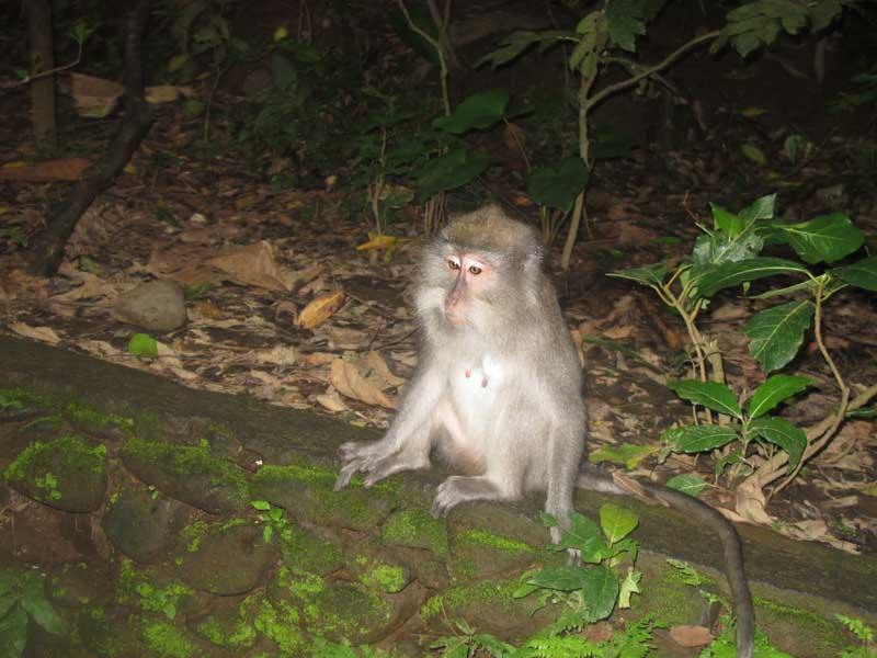 猴子林的猴子.jpg