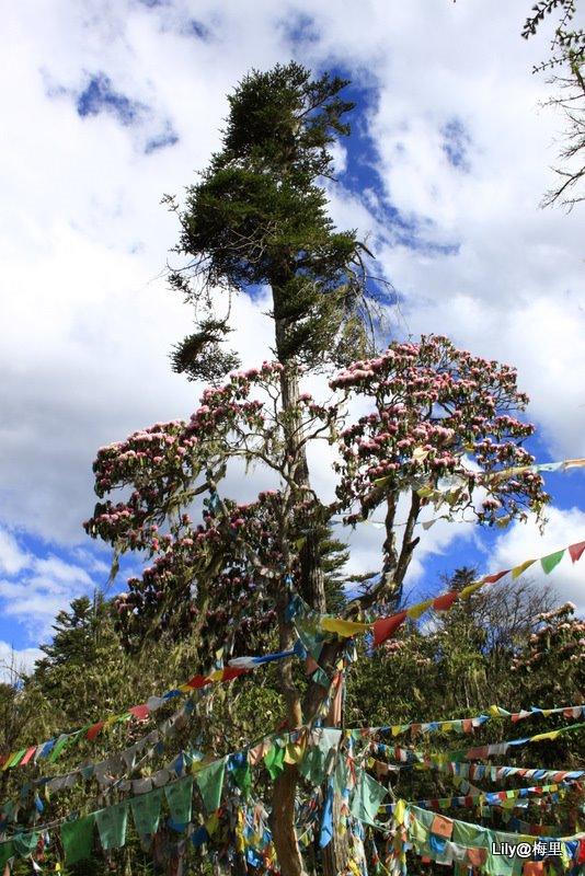 介个树上的花不知叫啥名.jpg
