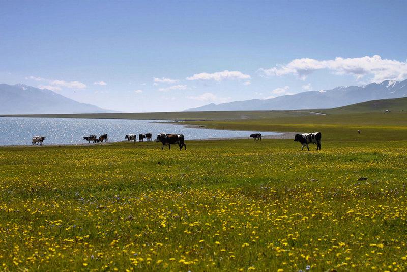 新疆 685-1.jpg