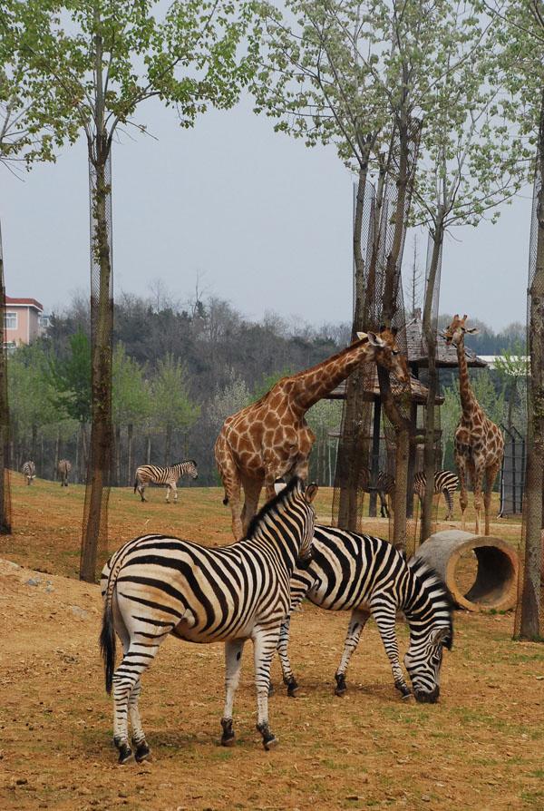 非洲食草动物