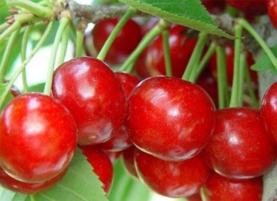 沙密豆樱桃